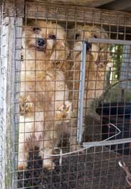 In Ag Industry, Missouri Puppy Mills Have New No  1 Fan