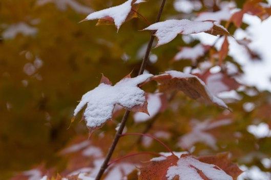 December 7th snow.