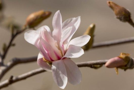 Late February bloom.